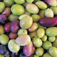 Aceite de oliva virgen extra. Variedades locales de Zuheros