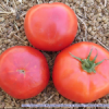 Tomate roteño