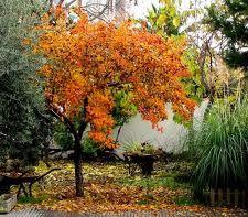 Tareas de noviembre en el huerto
