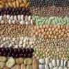 Libro Blanco de los Recursos Fitogenéticos