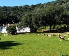 Visita a Riscos Altos en Cazalla de la Sierra