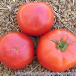 tomate-roteno