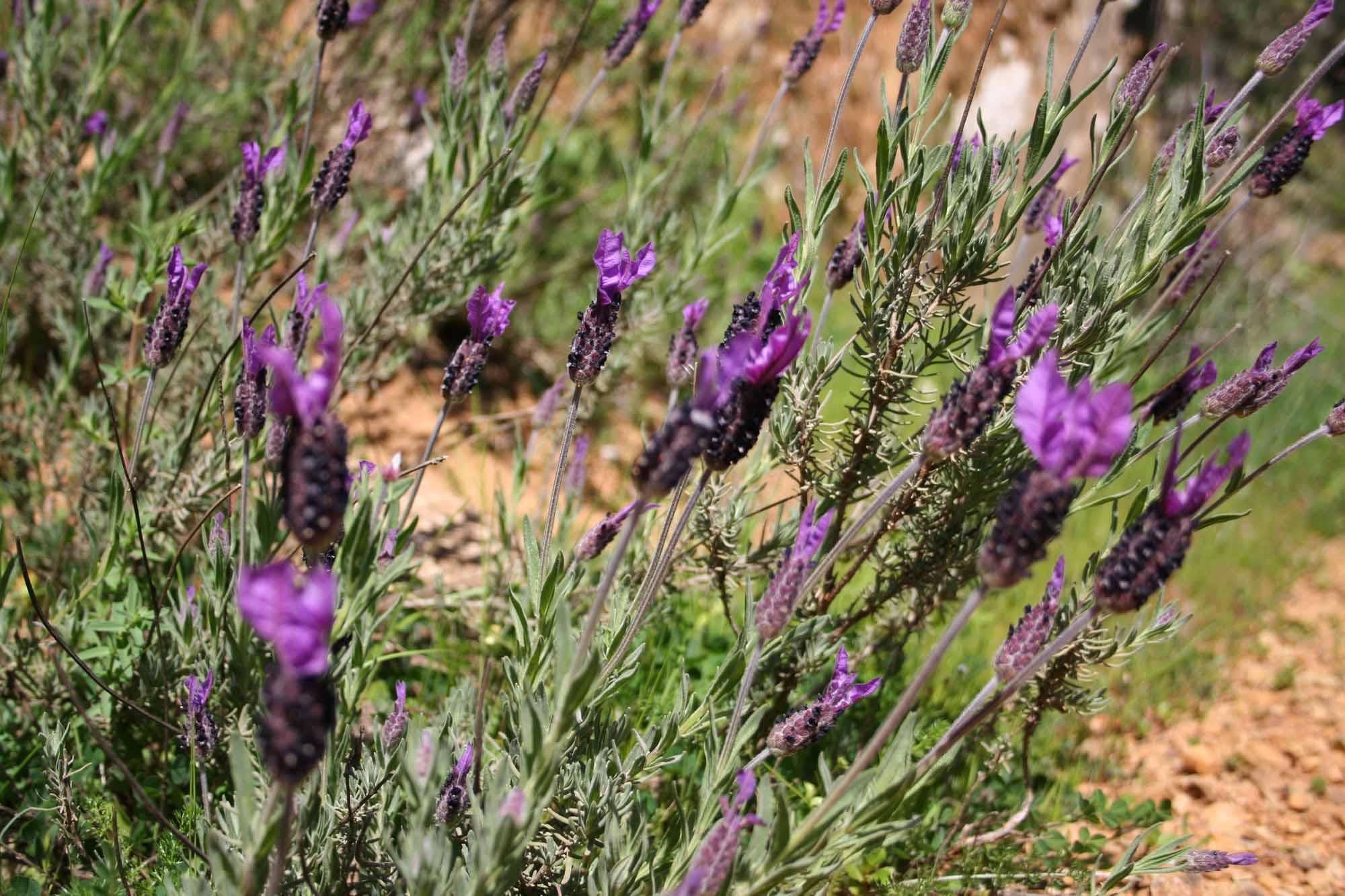 Sierra Norte de Sevilla, 10 de abril de 2010 « Slow Food SevillaySur